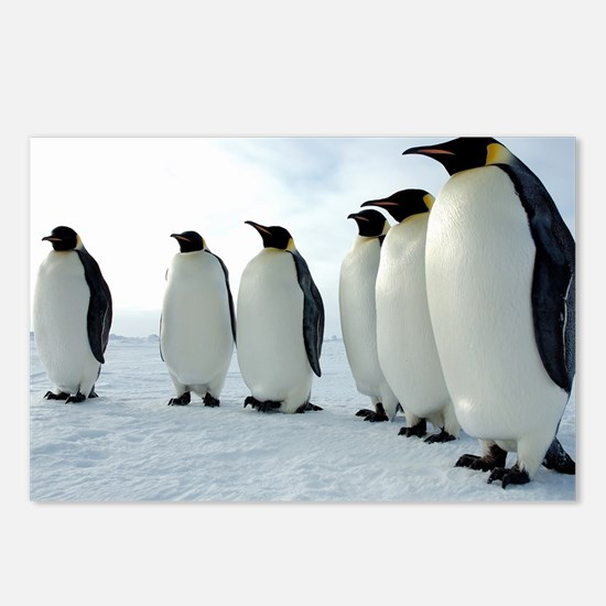 Lined up Emperor Penguins Postcards (Package of 8)