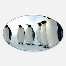 Lined up Emperor Penguins Decal