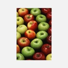 Various Types of Apples Rectangle Magnet