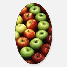 Various Types of Apples Decal
