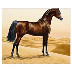 Vintage Arabian Horse Painting by William Barraud Poster