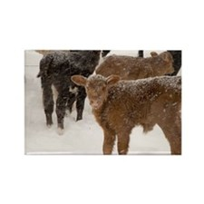 Calves in The Snow Rectangle Magnet