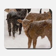 Calves in The Snow Mousepad