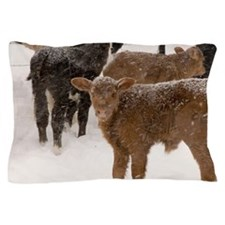 Calves in The Snow Pillow Case