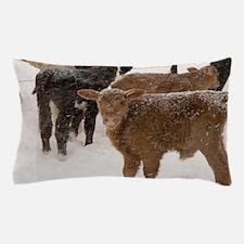 Calves in The Snow Pillow Case