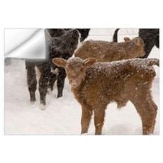 Calves in The Snow Wall Decal