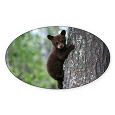 Bear Cub Climbing a Tree Decal