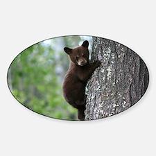 Bear Cub Climbing a Tree Sticker (Oval)