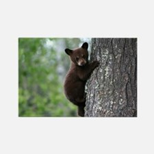 Bear Cub Climbing a Tree Rectangle Magnet