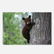 Bear Cub Climbing a Tree Postcards (Package of 8)