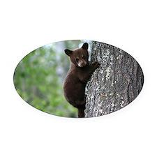 Bear Cub Climbing a Tree Oval Car Magnet