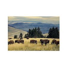 National Parks Bison Herd Rectangle Magnet