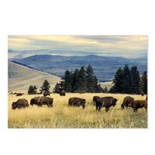 National Parks Bison Herd Postcards (Package of 8)