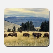 National Parks Bison Herd Mousepad