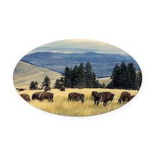 National Parks Bison Herd Oval Car Magnet