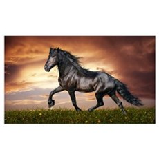 Beautiful Black Horse Framed Print