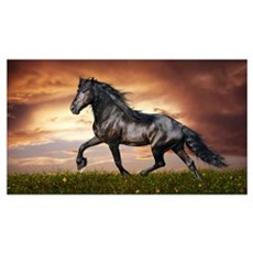 Beautiful Black Horse Poster