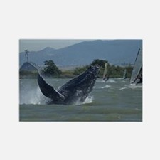 Humpback Whale Breaching by Winds Rectangle Magnet