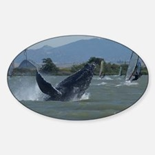 Humpback Whale Breaching by Windsur Decal