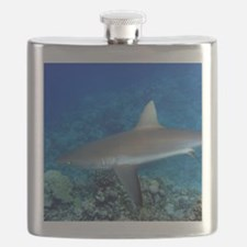 Grey Reef Shark Flask