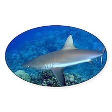 Grey Reef Shark Decal