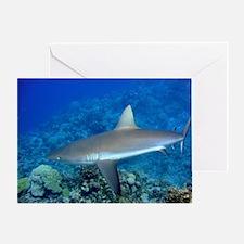 Grey Reef Shark Greeting Card