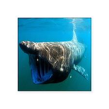 "Basking shark Square Sticker 3"" x 3"""