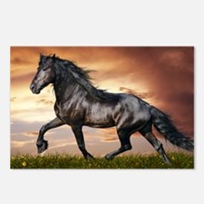 Beautiful Black Horse Postcards (Package of 8)