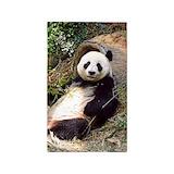 Panda bear 3x5 Rugs