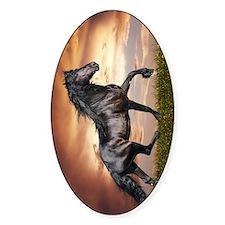 Beautiful Black Horse Bumper Stickers