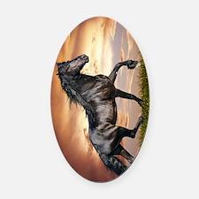 Beautiful Black Horse Oval Car Magnet
