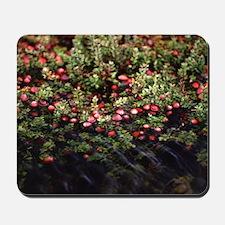 Cranberry Bog Mousepad