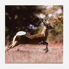 White-Tail Deer Running  Tile Coaster