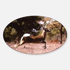 White-Tail Deer Running  Decal
