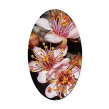 Pink Tree Blossoms Oval Car Magnet