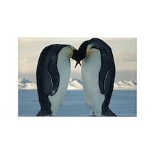 Emperor Penguin Courtship Rectangle Magnet