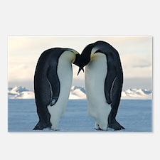 Emperor Penguin Courtship Postcards (Package of 8)