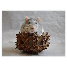 Little Rat in Basket Poster