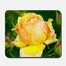 Beautiful Yellow and Red Roses Mousepad