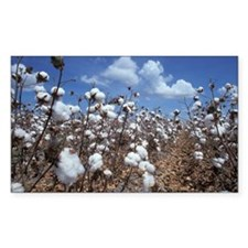 Cotton Field  Decal