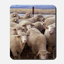 Sheep Herd Mousepad
