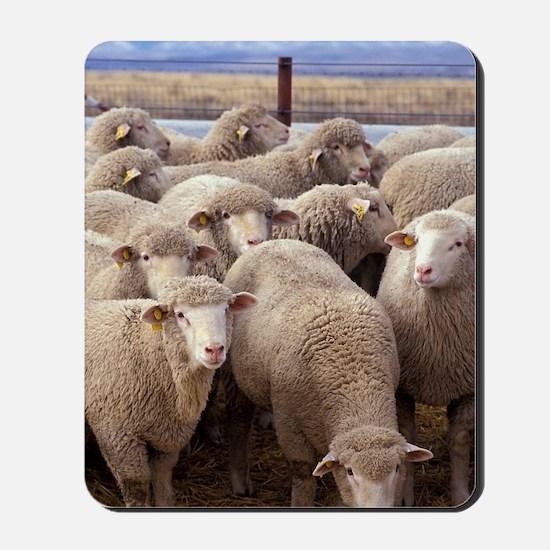 Sheep Herd Mousepad