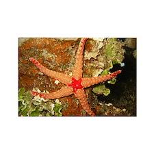 Orange Starfish Rectangle Magnet