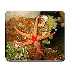 Orange Starfish Mousepad
