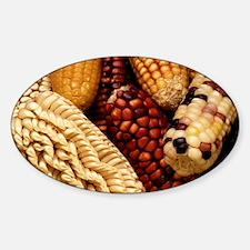 Dried up Fall Corn Decal