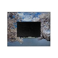 Thomas Jefferson Memorial with Cherr Picture Frame