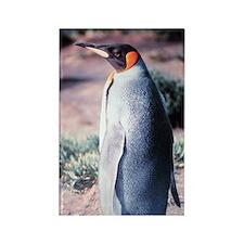 King Penguin on Heard Island Rectangle Magnet