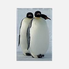 Emperor Penguins Huddled Rectangle Magnet