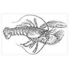 Vintage Lobster illustration Poster