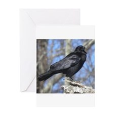 Crow perched Greeting Cards